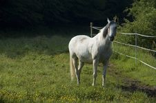 Free White Horse With Space Royalty Free Stock Photos - 2757268