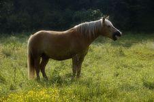 Free Bored Yawing Horse Royalty Free Stock Photos - 2757318