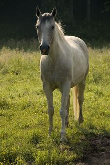 Free White Horse In Backlight Stock Photos - 2757333