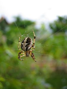 Free A Spider Webbing Stock Photo - 2758330