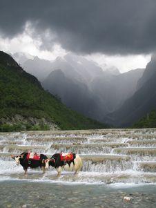 Free Yaks At Layered Waterfall Stock Photo - 2759320