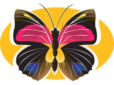 Free Butterfly Stock Images - 2759584