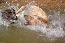 Free Waterdogs Stock Photo - 2759850