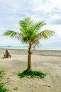 Free Coconut Tree On The Beach Stock Photo - 27509090