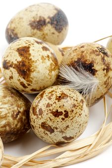 Free Quail Eggs Royalty Free Stock Photo - 27503295