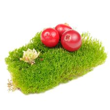 Free Cranberries On Clump Of Green Moss Royalty Free Stock Photography - 27504807