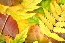 Free Background From Leaves Of Different Colors Royalty Free Stock Photo - 27506815