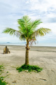 Free Coconut Tree On The Beach Stock Photo - 27509090