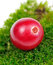 Free Cranberry On Green Moss Close-Up Royalty Free Stock Image - 27504856