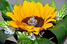 Free Sunflower Bouquet Stock Photography - 27514252
