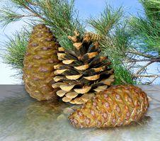Free Cones Stock Photography - 27515482