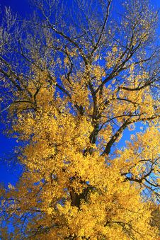 Free Autumn Tree Stock Photography - 27515672