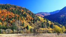 Free Autumn Forest Stock Image - 27518301