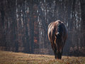 Free Quarter Horse In Pasture Royalty Free Stock Photo - 27522635