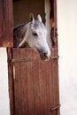 Free Horse Stock Image - 27527361