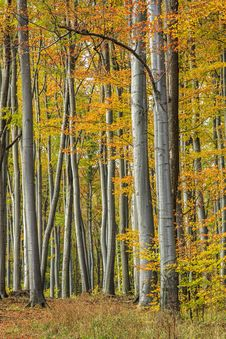 Free Colorful Autumn Forest Stock Photography - 27522192