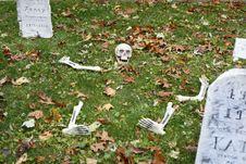 Free Skeleton 2 Royalty Free Stock Image - 27522446