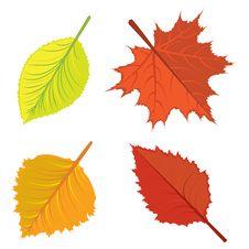 Free Autumn Leaves Set Royalty Free Stock Photo - 27524505