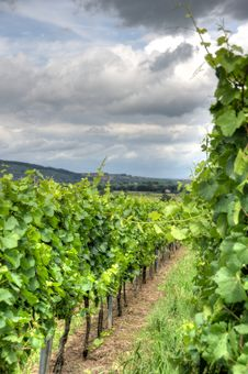Free Alsace Landscape And Vinewyard Royalty Free Stock Image - 27526576