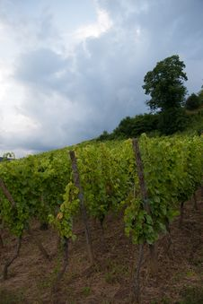 Free Alsace Landscape And Vinewyard Stock Image - 27526591