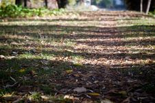 Free Forest Path Stock Image - 27526721