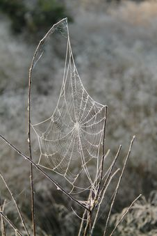 Free Spider S Cobweb. Royalty Free Stock Photos - 27528538