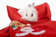 Free Rabbit Royalty Free Stock Photo - 27529065