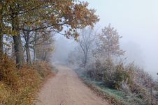 Free Foggy Country Road In Autumn. Stock Photo - 27529330