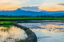 Free Rice Field Fill With Water Stock Photos - 27529603