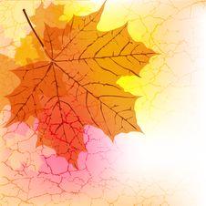 Free Maple Leaf Royalty Free Stock Photos - 27534558