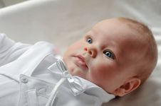 Free A Small Miracle Royalty Free Stock Photos - 27536768