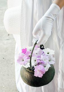 Free Brides Petunias Royalty Free Stock Images - 27538399