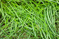 Free Green Grass Surface Royalty Free Stock Images - 27549739