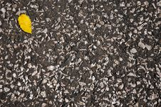 Yellow Leaf On Asphalt Royalty Free Stock Photography