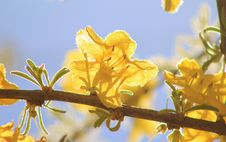Free Wild Flowers - African Golden Surprise Of Spring 4 Royalty Free Stock Photo - 27540565