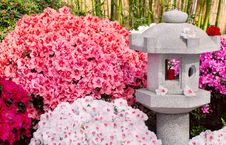 Free Azalea And Asian Lantern Royalty Free Stock Photo - 27541205