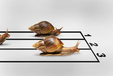 Free Three Snails Racing Royalty Free Stock Image - 27542996