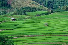 Free Terraced Rice Fields In Northern Thailand Stock Photos - 27545653