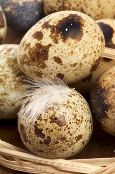 Free Quail Eggs Royalty Free Stock Image - 27545766