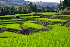 Free Terraced Rice Fields In Northern Thailand Royalty Free Stock Image - 27545876