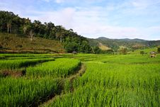 Free Terraced Rice Fields In Northern Thailand Stock Photography - 27545952