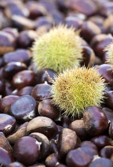 Free Chestnuts Royalty Free Stock Images - 27548049