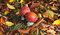 Free Fly Agaric Fungi Amongst Fallen Leaves Stock Photos - 27546813