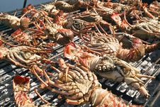 Free Grilled Lobsters Stock Photography - 27554812