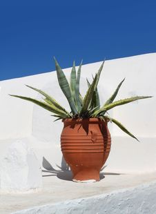 Free Mediterranean Terracotta Cactus Pot Royalty Free Stock Images - 27555769