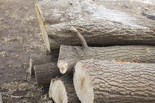 Free Fire Wood Stock Photo - 27559130