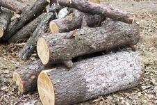 Free Fire Wood Stock Photography - 27559262