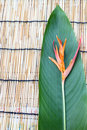 Free Heliconia Flower On The Wooden Table Cloth Royalty Free Stock Photos - 27566588