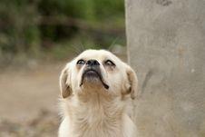 Free Dog Royalty Free Stock Image - 27562006