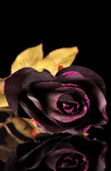 Free Black Roses Stock Images - 27564414
